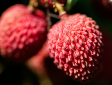 Do you know what to look for in a premium lychee?
