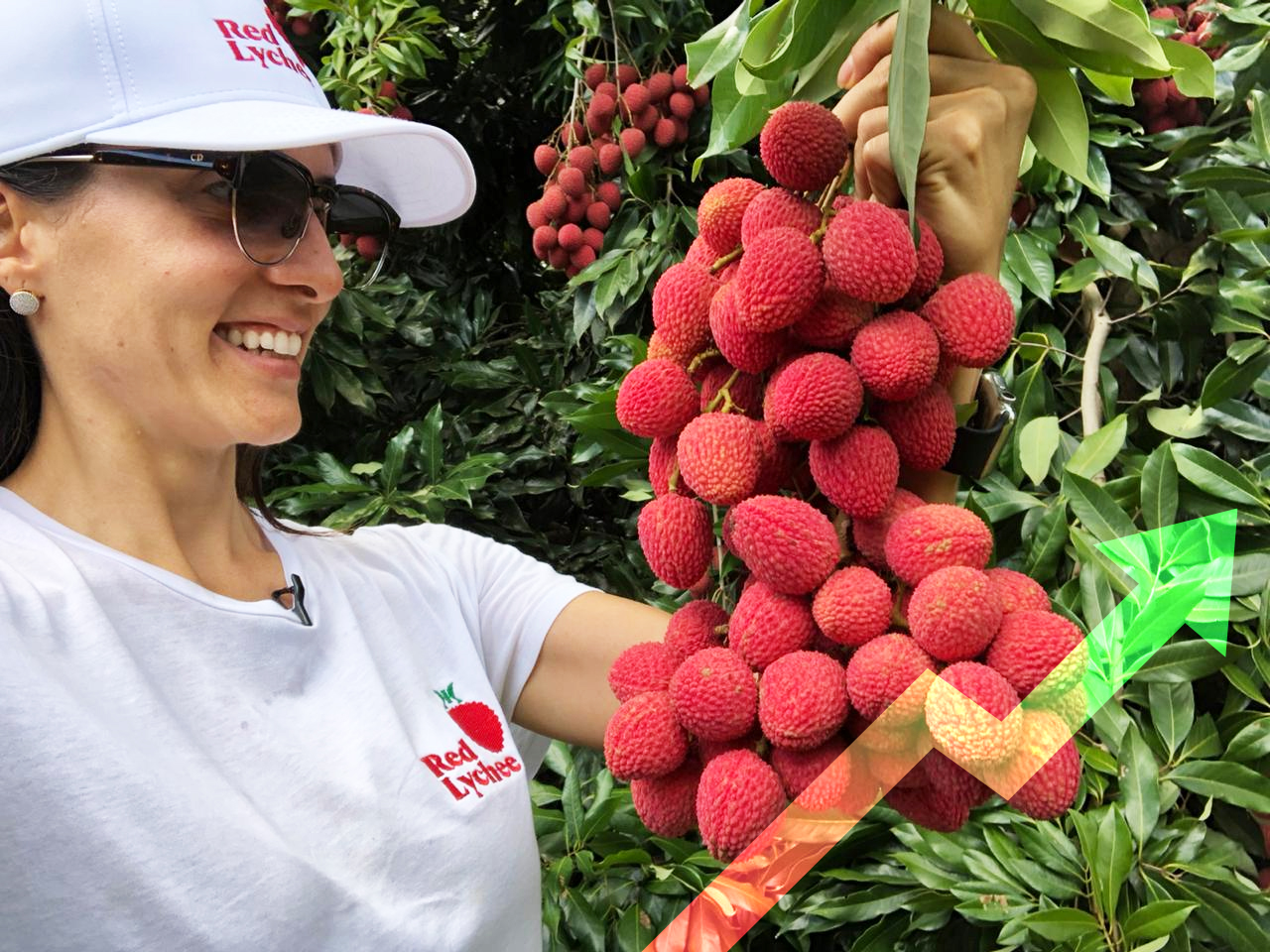 Growth of the Brazilian fruit Market